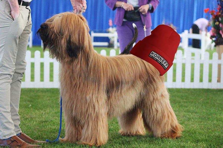 Dog Show Korneff